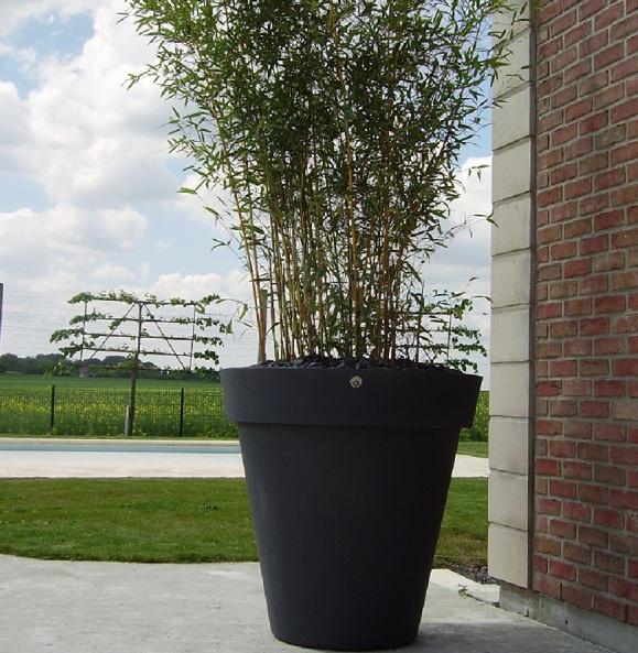 Pots Bambou près de Saint-Quentin
